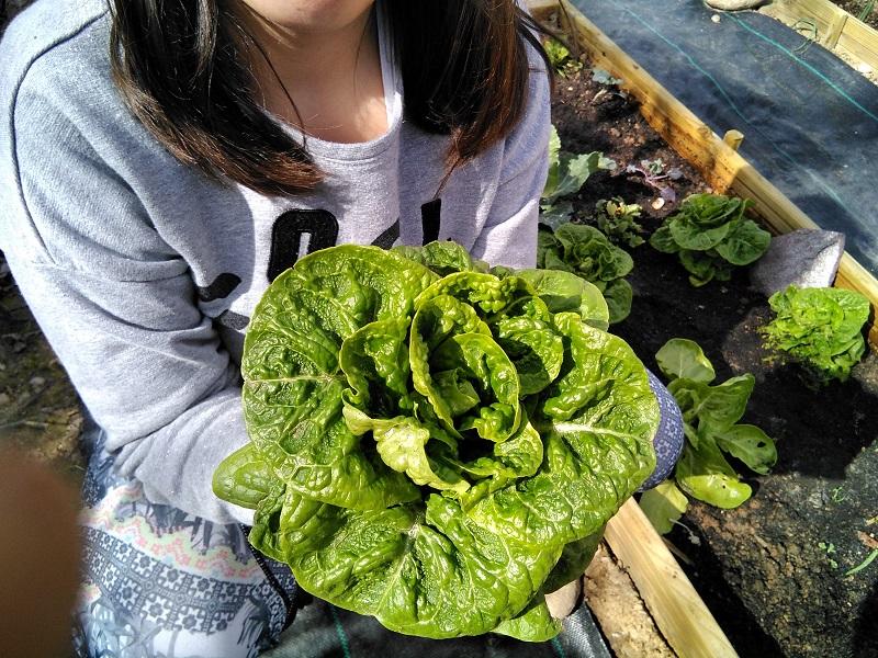 Huerto (V): Y con la primavera, ¡el buen tiempo y las primeras cosechas!