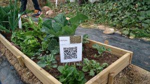 Huerto (VI): Letreros QR para nuestras hortalizas