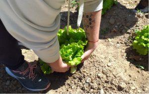 Lee más sobre el artículo Cosecha de primavera y siembra de verano